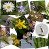 Mid-term review of EU biodiversity strategy:Voting at the February Plenary session