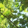 """""""Building the Bioeconomy: Insights from European strategies"""". ThinkForest event on 7 June 2016"""