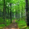 Future of the Forest – Czech Contribution to Challenges for European Research and Policies