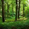 The role of forests and forest sector in bioeconomy