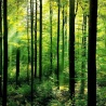 """Study """"'Mitigation impact of EU forest could nearly double through climate smart forestry"""""""