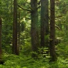 Forest Sector Outlook Study: Brainstorming Workshop