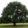 International conference on 'European Oak: Production, Consumption and Market Dynamics