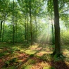 LULUCF: EU approves forestry CO2 accounting rules