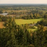 LULUCF: Practical consequences for the forest-based sector