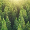 High-Level Conference on Forests at the Heart of Sustainable Development