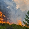 Commission report: more countries than ever hit by forest fires in 2018