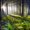 FOREST EUROPE publication: Adaptation to Climate Change in Sustainable Forest Management in Europe