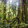 Commission launches global cooperation platform to fight deforestation