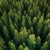 Council conclusions on Perspectives for the EU forest-related policies and EU forest strategy post 2020