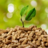 Commission seeking feedback on forest biomass compliance rules