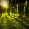 Towards a new EU Forest Strategy: position of the European Woodworking Industry