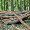 The new European Forest Strategy is not addressing the sawmill industry supply  challenges